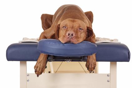 Hund auf Wellness-Liege